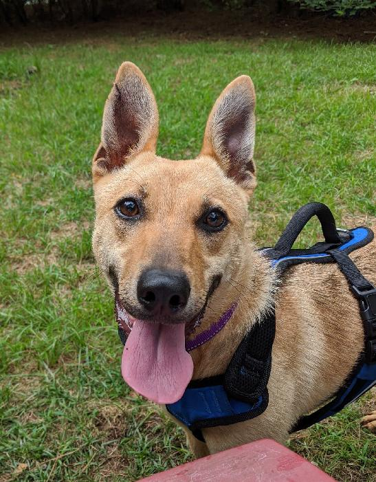 Pet Of The Week Trixie